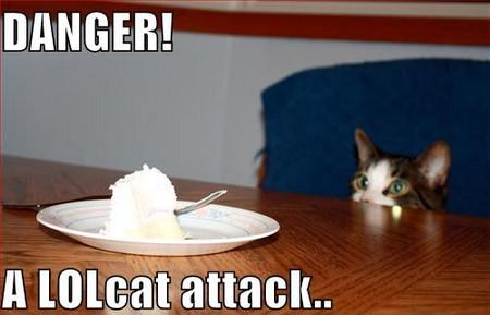 lolcat-attack