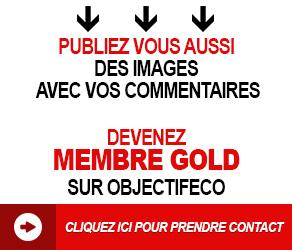 membre-gold