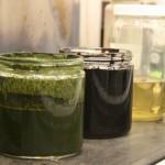 oil from algae