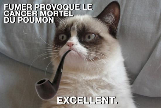 grumpy cat fumer et cancer du poumon