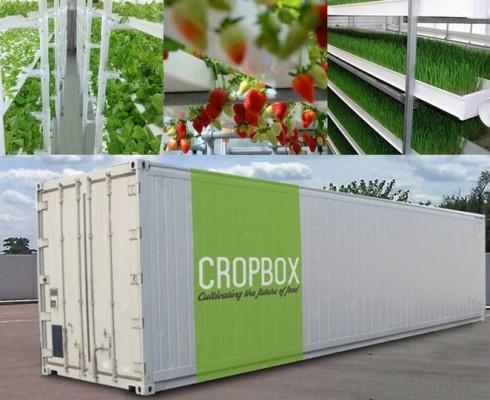 cropbox-shipping-container-farm
