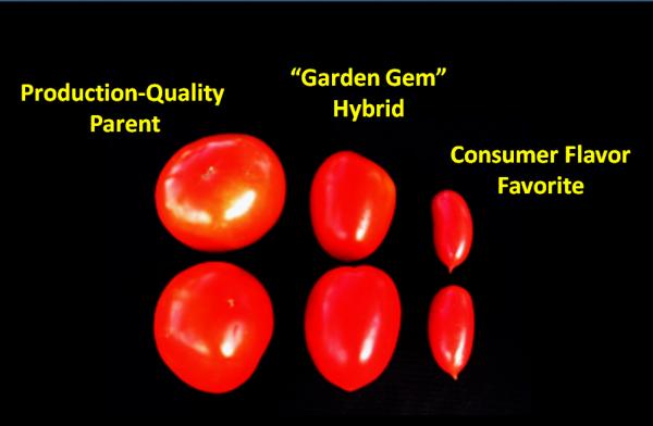 Garden Gem