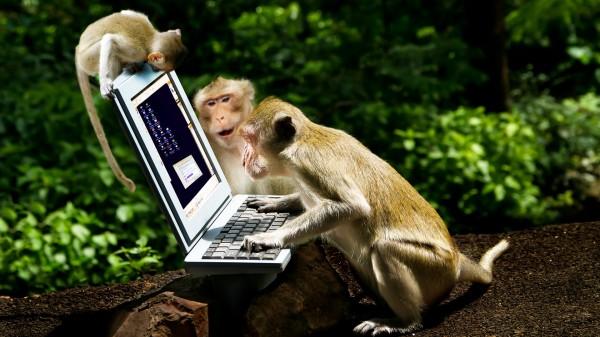monkey bourse