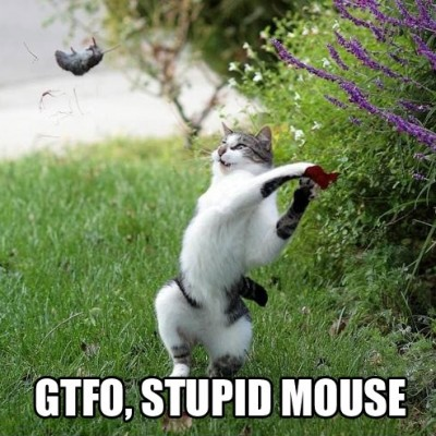 cat gtfo stupid mouse