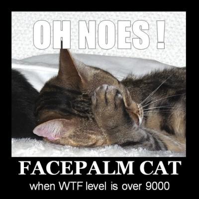 facepalm cat